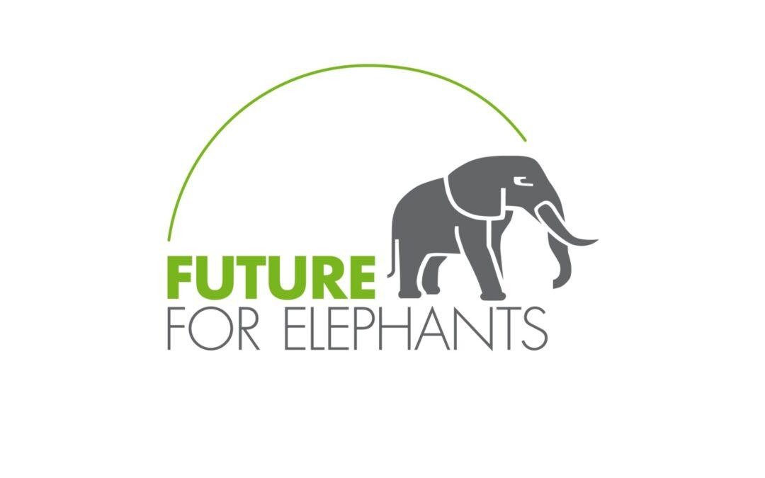 Vokabelolympiade: WHG-Schüler unterstützen Future for Elephants e.V.